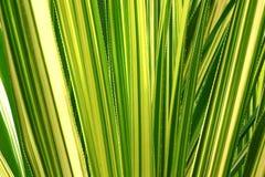 Aloeblätter Stockfotografie