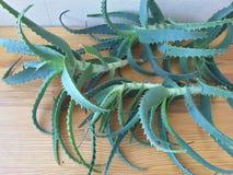 Aloeblätter auf dem Tisch, Aloesaft machen Stockfoto