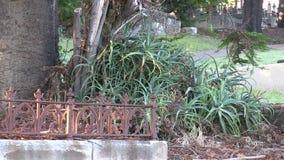 Aloer i kyrkogården arkivfilmer