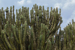 Aloesów drzew krajobraz Obrazy Royalty Free