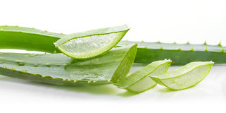 Aloesów liście Obraz Stock