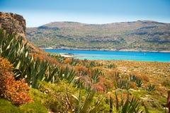 Aloesów liście na wyspie Zdjęcia Stock