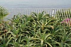 aloes Japan zrobił fot rośliny Tokyo Zdjęcie Royalty Free