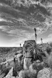 Aloes na halnych skałach kształtuje teren zmierzch z chmurnymi niebami Obraz Royalty Free
