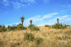 Aloes rośliny i zima obszar trawiasty Przeciw Błękitnemu Chmurnemu niebu Fotografia Stock
