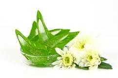 Aloes Vera (aloesu barbadensis młyn ) bardzo pożytecznie ziołowa medycyna Fotografia Royalty Free