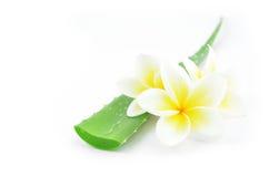 Aloes Vera i plumeria Zdjęcia Stock