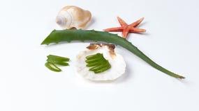 Aloes Vera i seashells Zdjęcie Stock