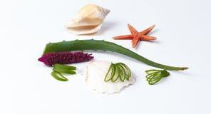 Aloes Vera i seashells Zdjęcia Stock
