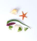 Aloes Vera i seashells Zdjęcia Royalty Free