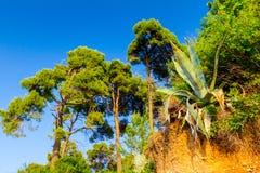 Aloes Vera r na krawędzi niewygładzonej falezie Zdjęcie Royalty Free