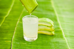 Aloesu Vera kawałki na tle bananowy liść Organicznie kosmetyka pojęcie Zdjęcie Royalty Free