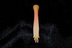 Aloesu Vera kwiat Makro- 2 Fotografia Royalty Free