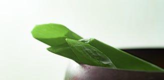 Aloesu Vera plasterka zieleni liścia zbliżenie Fotografia Stock