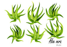 Aloesu Vera wektoru ilustracja Fotografia Stock