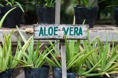 Aloesu Vera znak Fotografia Royalty Free