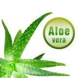 aloesu zakończenia zieleni ikony fotografia w górę Vera Obrazy Stock