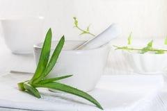 Aloevera-Blätter Lizenzfreies Stockfoto