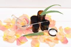 Aloevera-Blätter mit den rosafarbenen Blumenblättern lizenzfreie stockfotografie
