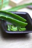 Aloevera leaves arkivbild
