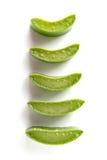 Aloevera su fondo bianco Fotografie Stock Libere da Diritti