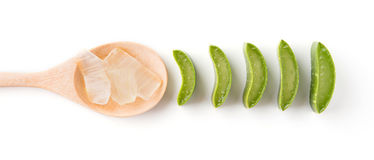 Aloevera su fondo bianco Fotografia Stock