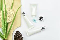 Aloevera växt, naturlig skincareskönhetsprodukt Kosmetiska flaskbehållare med gröna växt- sidor Royaltyfri Fotografi