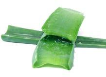 Aloevera verde Fotografia Stock Libera da Diritti