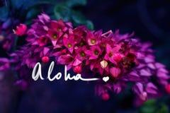 Aloha con un motto della scrittura del cuore su una foto fotografie stock libere da diritti