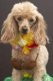 Aloha Cutie Fotografie Stock