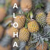 Aloha. Fresh pineapple in local market. Royalty Free Stock Photography
