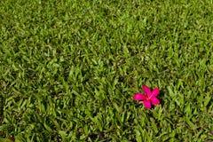 Aloha Grün- und Rothintergrund Stockbild