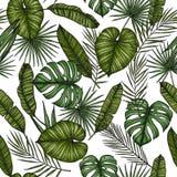 aloha Hawaii bezszwowy deseniowy Tło z palmą opuszcza monstera Obraz Royalty Free