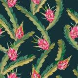 Aloha hawaiisches nahtloses Muster Exotische Blätter und Frucht Vektor Dragonfruit, pitaya, pitahaya Pitaya ist die Anlage herein Stockfoto