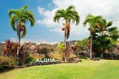 Aloha podpisuje z drzewkami palmowymi na Dużej wyspie Hawaje zdjęcia stock