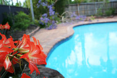 Aloha Swimming. Landscaped swimming pool on a summer day Stock Photo