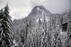 Alojamento Alpental Washington do esqui da montanha das árvores da neve fotografia de stock