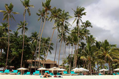 Alona Beach Palms Immagine Stock Libera da Diritti