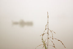 Alone. Reed alone in the fog Stock Photo