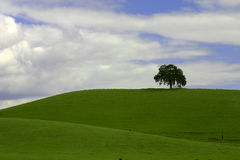 Alone. Single tree alone on the hilltop Royalty Free Stock Photos