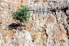 Alone. Single tree on eroded mountain Stock Photography