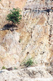 Alone. Single tree on eroded mountain Royalty Free Stock Photography