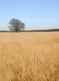 Alone. Lonely tree is standing in the middle of a field Royalty Free Stock Images
