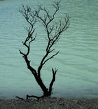 Alone. A dead tree found at the crater of vulcano at West Java (Kawah Putih Royalty Free Stock Photography
