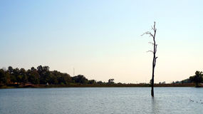 Alone abstract concept, dead tree in the middle of lake Stock Photos