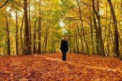 Alone in autumn forest. A young woman standing with her back to the camera on a forest way in autumn Stock Photos