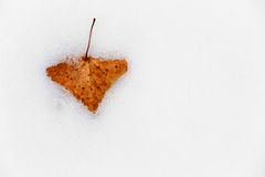 Alone autumn leaf on snow Royalty Free Stock Photography