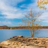 Alone  autumn tree on rocky shore of beautiful lake. Royalty Free Stock Image