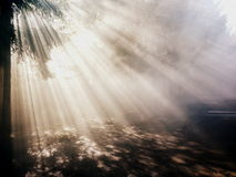 Alone backlit forest sun rays. Sun shining through the forest Royalty Free Stock Photos