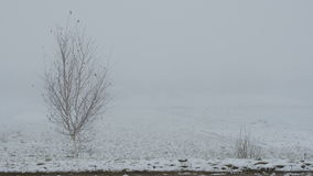 Alone bare tree in fog in winter. stock video footage